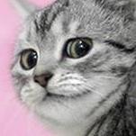 dhocke's avatar