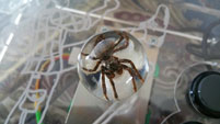 Spider Stick image #2