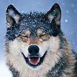 xThunderxWolfx's avatar