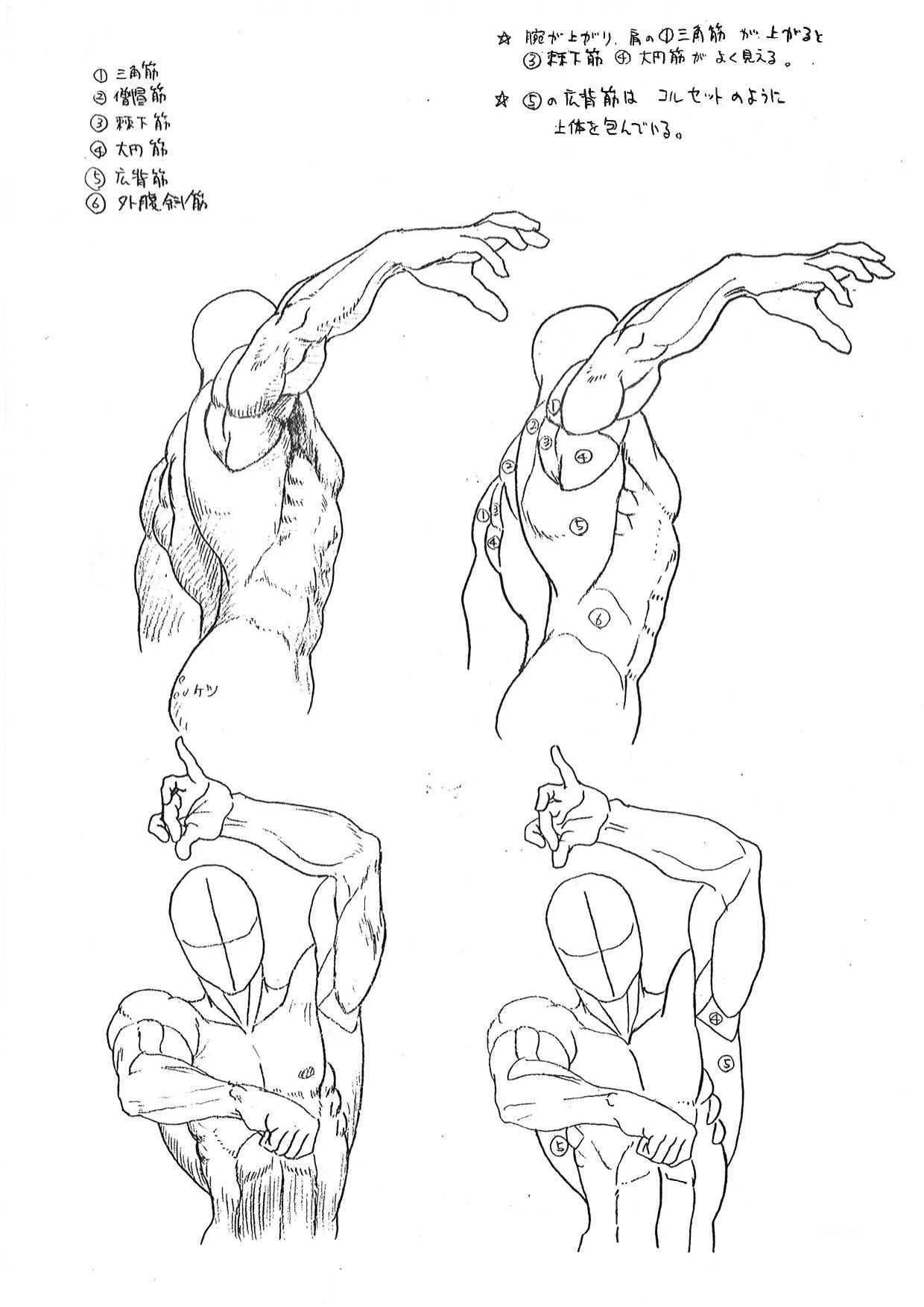 Street Fighter anatomy guide 7 out of 9 image gallery