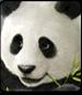 Panda in Tekken 7